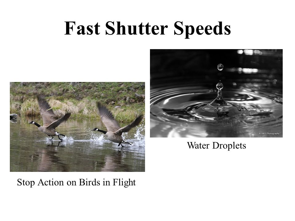 Fast Shutter Speeds Stop Action on Birds in Flight Water Droplets