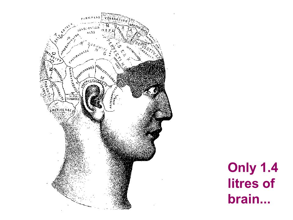 Only 1.4 litres of brain...