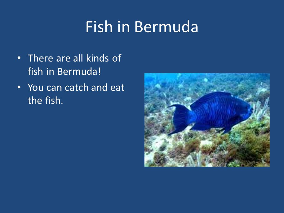 Fish in Bermuda There are all kinds of fish in Bermuda! You can catch and eat the fish.