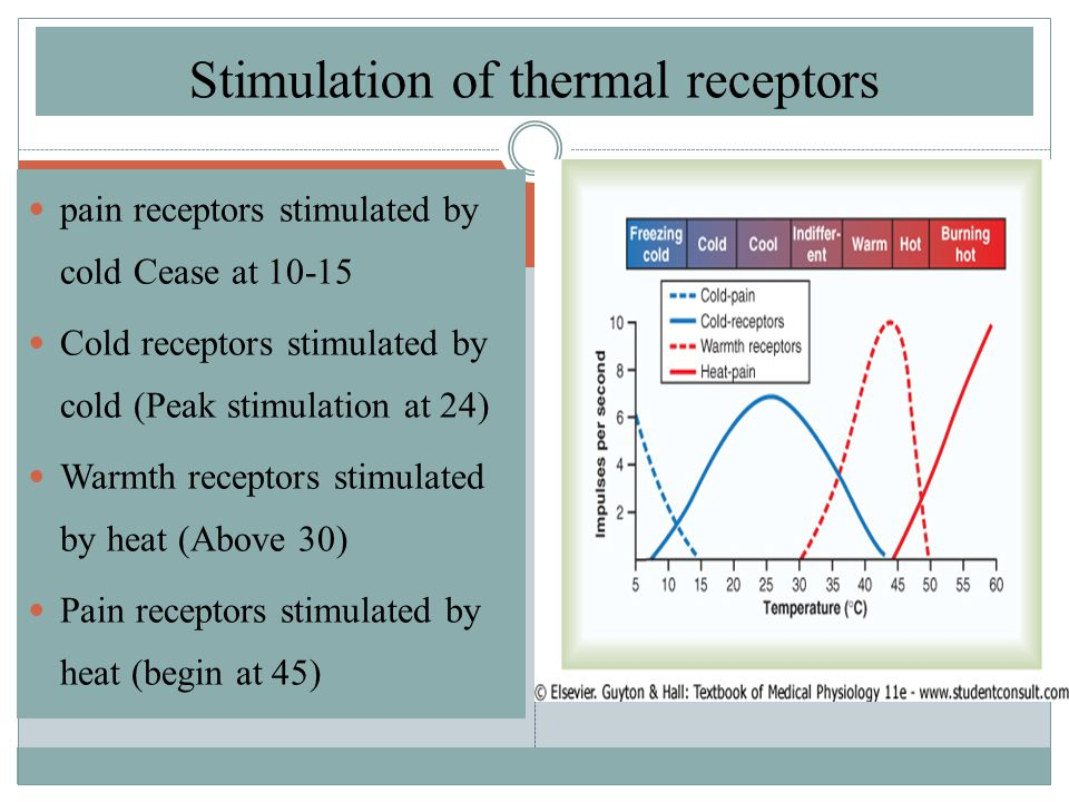 pain receptors stimulated by cold Cease at 10-15 Cold receptors stimulated by cold (Peak stimulation at 24) Warmth receptors stimulated by heat (Above