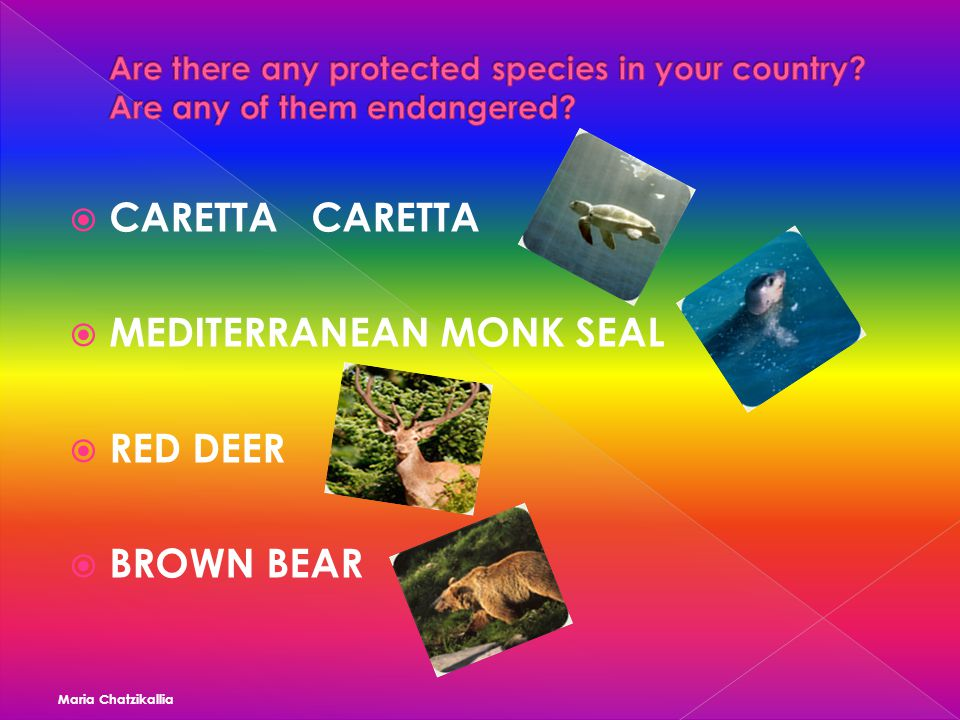 CARETTA CARETTA  MEDITERRANEAN MONK SEAL  RED DEER  BROWN BEAR Maria Chatzikallia