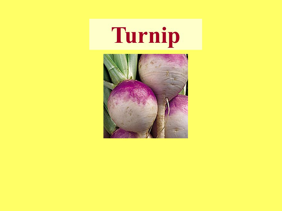 Harvesting ☻ Turnips should be harvested soon after reaching suitable size, since the quality rapidly deteriorate.