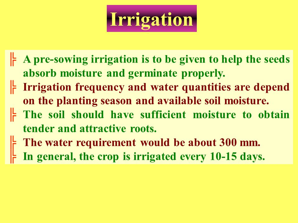 Irrigation ╠A pre-sowing irrigation is to be given to help the seeds absorb moisture and germinate properly. ╠Irrigation frequency and water quantitie