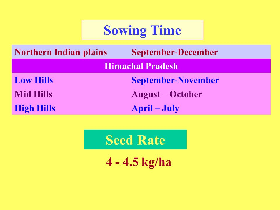 Spacing 30-45cm X 7.5-15cm 30 cm X 10cm(H.P.) ◙ Mix the seeds with sand or ash to facilitate uniform sowing ◙ Sowing depth is 1.5-2.5cm on the ridges.