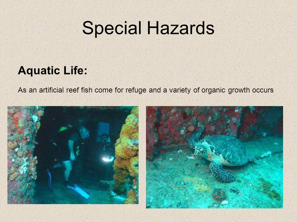 Special Hazards Aquatic Life: As an artificial reef fish come for refuge and a variety of organic growth occurs