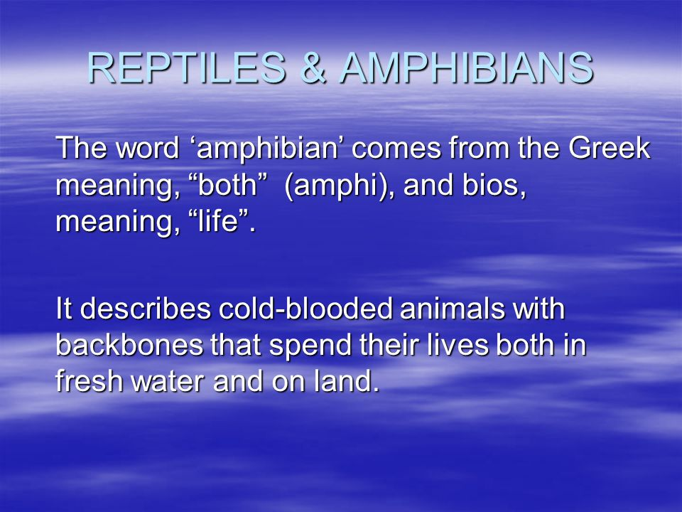 """REPTILES & AMPHIBIANS The word 'amphibian' comes from the Greek meaning, """"both"""" (amphi), and bios, meaning, """"life"""". It describes cold-blooded animals"""