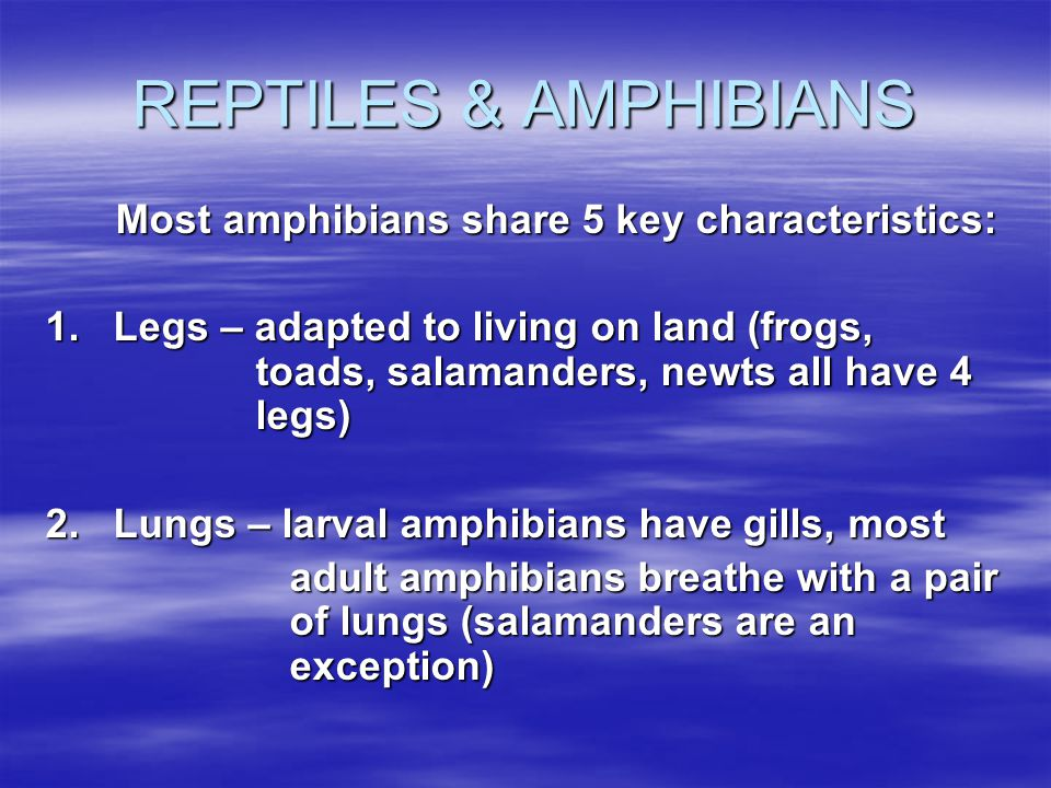 REPTILES & AMPHIBIANS Most amphibians share 5 key characteristics: 1. Legs – adapted to living on land (frogs, toads, salamanders, newts all have 4 le