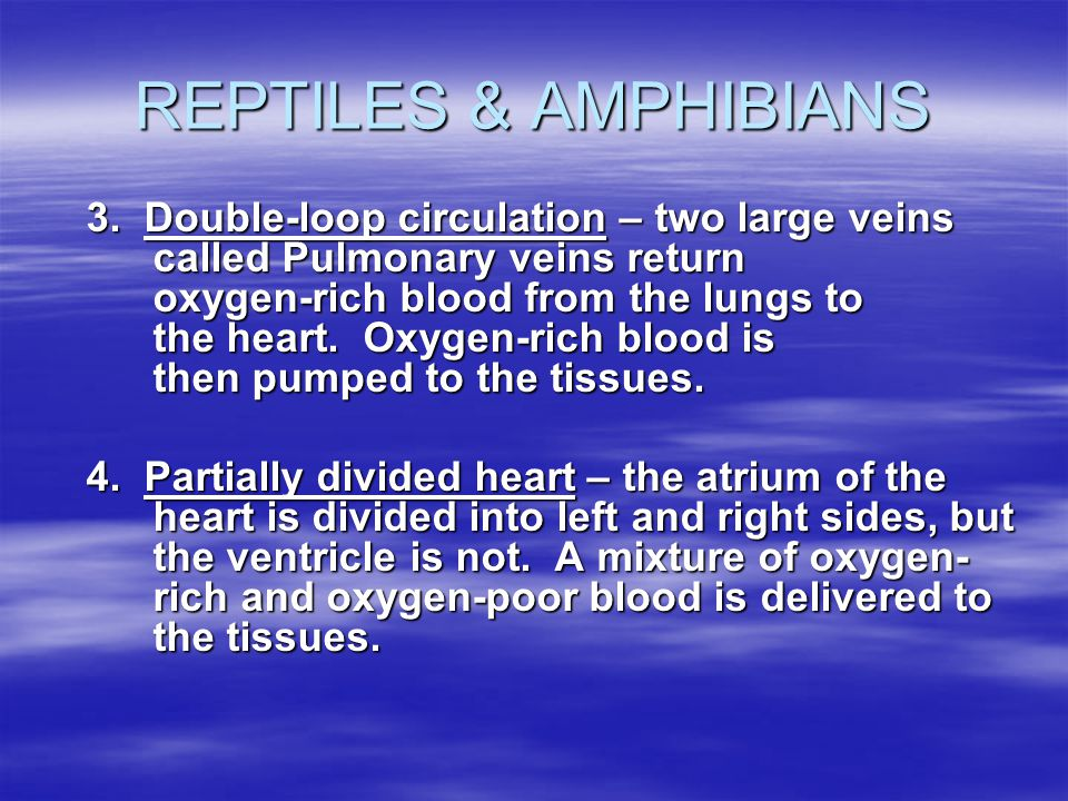 REPTILES & AMPHIBIANS 3. Double-loop circulation – two large veins called Pulmonary veins return oxygen-rich blood from the lungs to the heart. Oxygen
