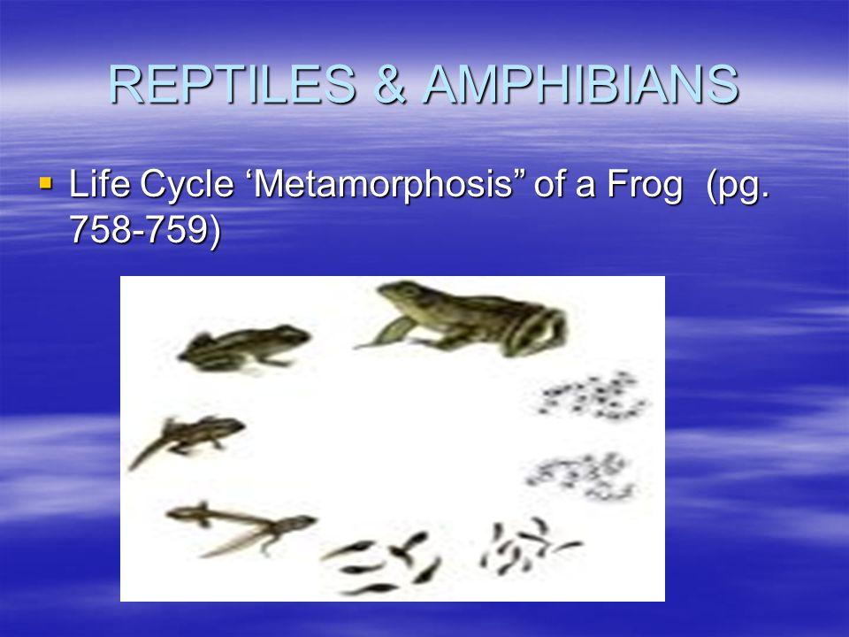 "REPTILES & AMPHIBIANS  Life Cycle 'Metamorphosis"" of a Frog (pg. 758-759)"