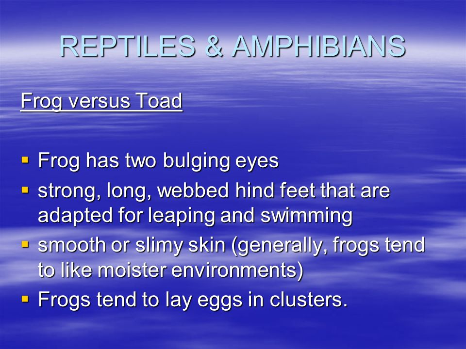 REPTILES & AMPHIBIANS Frog versus Toad  Frog has two bulging eyes  strong, long, webbed hind feet that are adapted for leaping and swimming  smooth