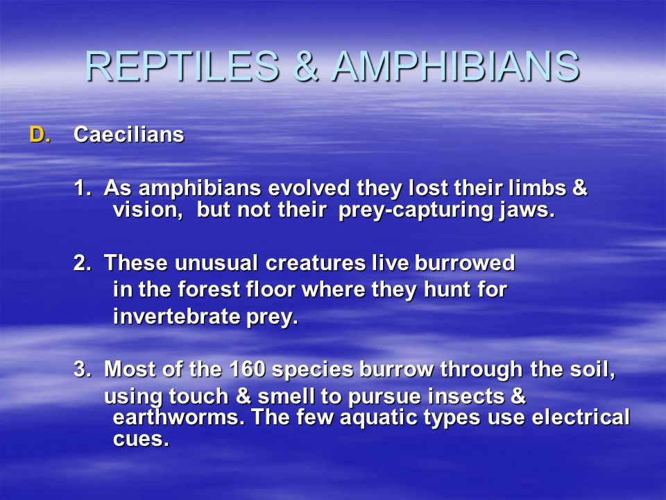 REPTILES & AMPHIBIANS D.Caecilians 1. As amphibians evolved they lost their limbs & vision, but not their prey-capturing jaws. 2. These unusual creatu