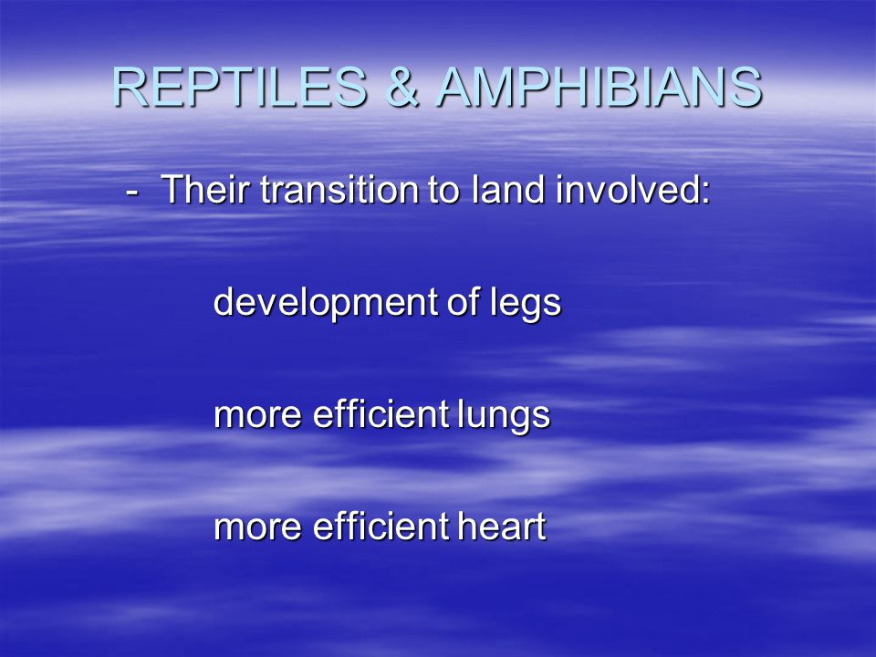 REPTILES & AMPHIBIANS - Their transition to land involved: development of legs more efficient lungs more efficient heart
