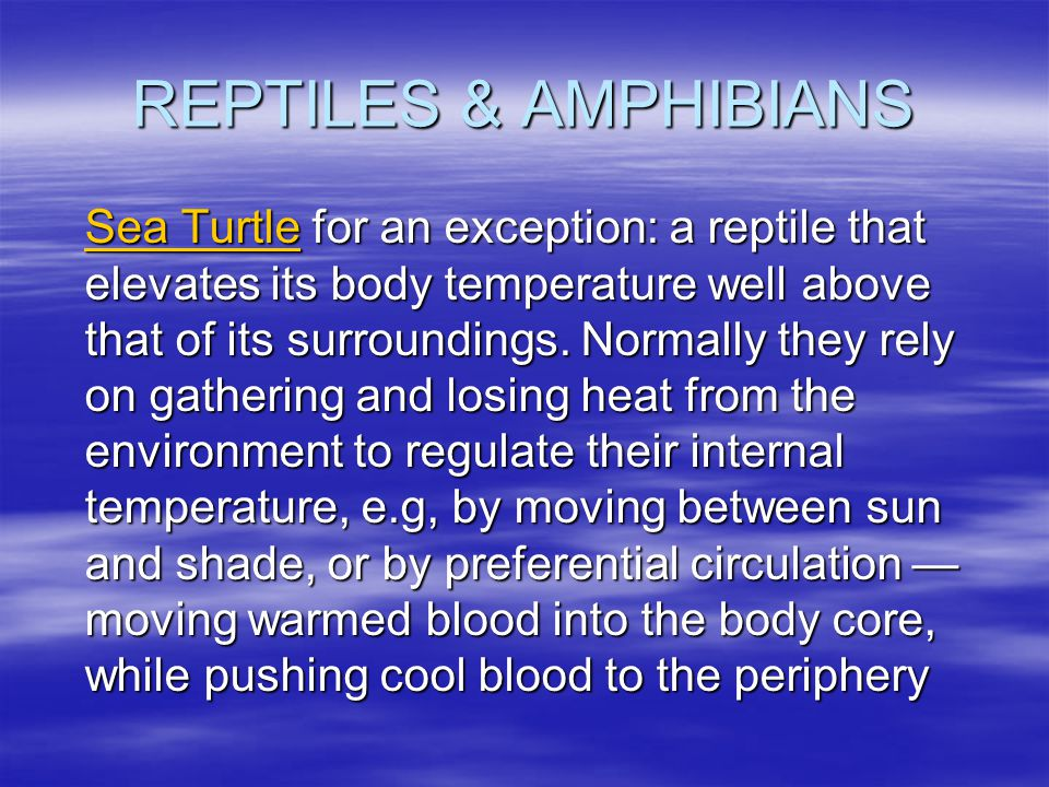 REPTILES & AMPHIBIANS Sea TurtleSea Turtle for an exception: a reptile that elevates its body temperature well above that of its surroundings. Normall