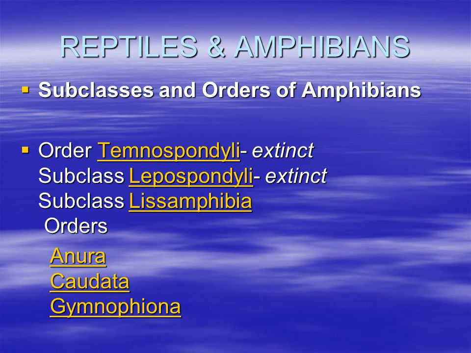 REPTILES & AMPHIBIANS  Subclasses and Orders of Amphibians  Order Temnospondyli- extinct Subclass Lepospondyli- extinct Subclass Lissamphibia Orders