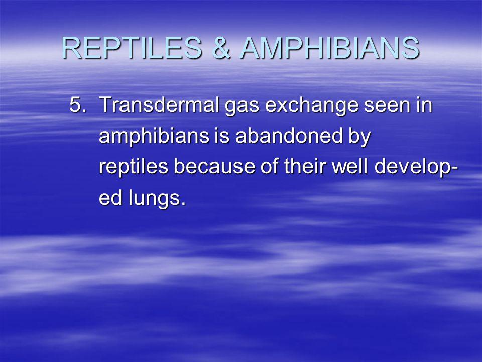 REPTILES & AMPHIBIANS 5. Transdermal gas exchange seen in amphibians is abandoned by amphibians is abandoned by reptiles because of their well develop