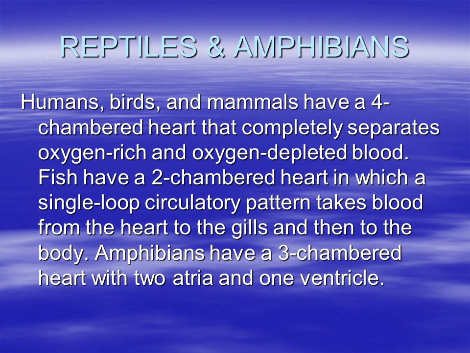 REPTILES & AMPHIBIANS Humans, birds, and mammals have a 4- chambered heart that completely separates oxygen-rich and oxygen-depleted blood. Fish have