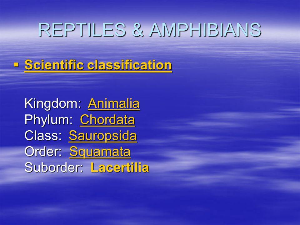 REPTILES & AMPHIBIANS  Scientific classification Scientific classification Scientific classification Kingdom: Animalia Phylum: Chordata Class: Saurop