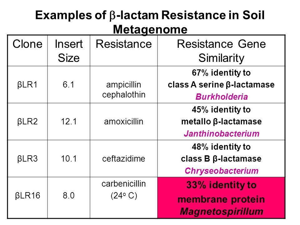 Examples of  -lactam Resistance in Soil Metagenome CloneInsert Size ResistanceResistance Gene Similarity βLR16.1ampicillin cephalothin 67% identity to class A serine β-lactamase Burkholderia βLR212.1amoxicillin 45% identity to metallo β-lactamase Janthinobacterium βLR310.1ceftazidime 48% identity to class B β-lactamase Chryseobacterium βLR168.0 carbenicillin (24 o C) 33% identity to membrane protein Magnetospirillum