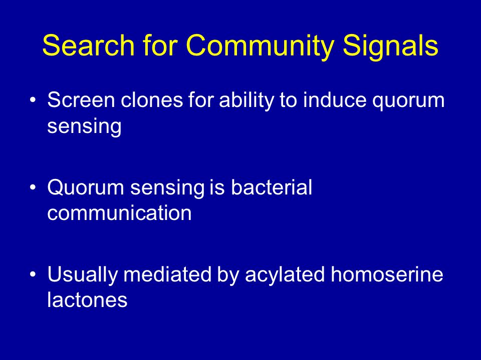 Search for Community Signals Screen clones for ability to induce quorum sensing Quorum sensing is bacterial communication Usually mediated by acylated homoserine lactones