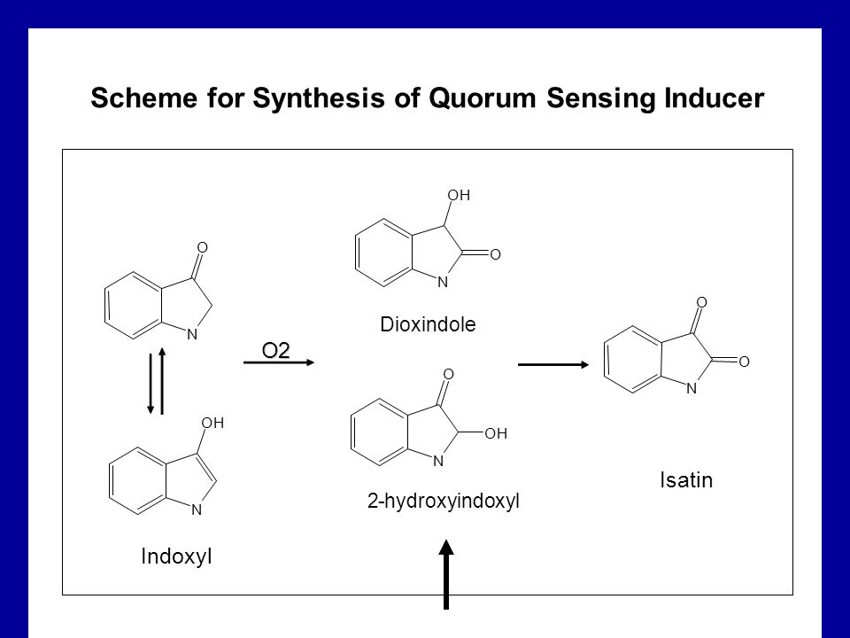 Scheme for Synthesis of Quorum Sensing Inducer N O O N O N OH N O OH N OH O Indoxyl Isatin O2 Dioxindole 2-hydroxyindoxyl