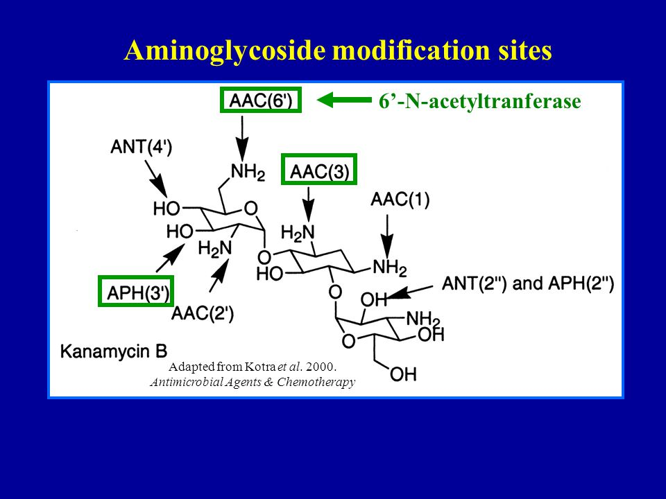 6'-N-acetyltranferase Aminoglycoside modification sites Adapted from Kotra et al.