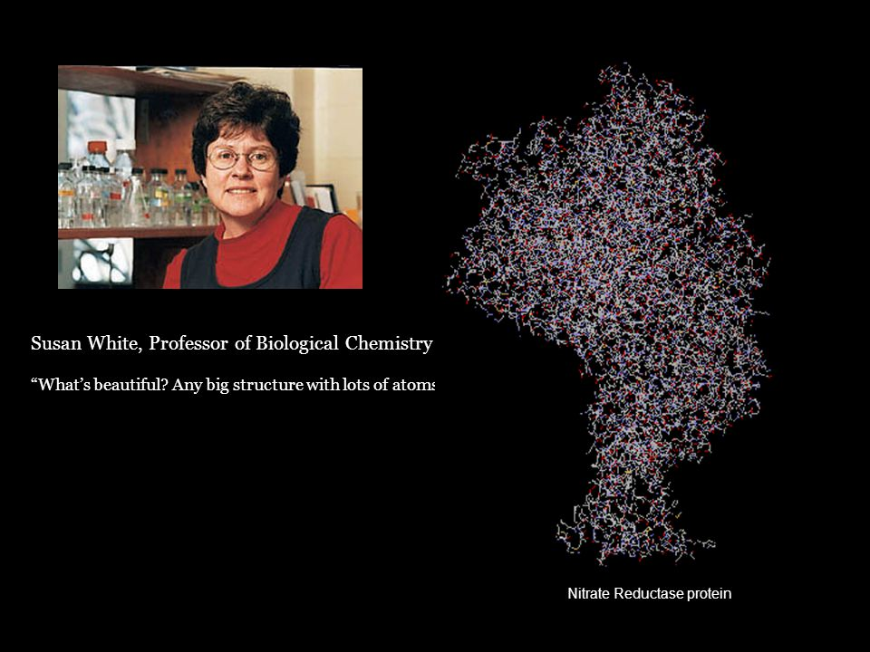 "Susan White, Professor of Biological Chemistry ""What's beautiful? Any big structure with lots of atoms."" Nitrate Reductase protein"