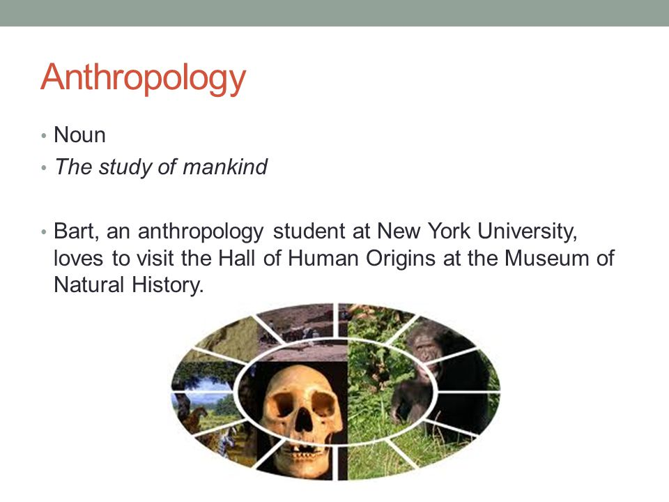 Anthropology Noun The study of mankind Bart, an anthropology student at New York University, loves to visit the Hall of Human Origins at the Museum of Natural History.