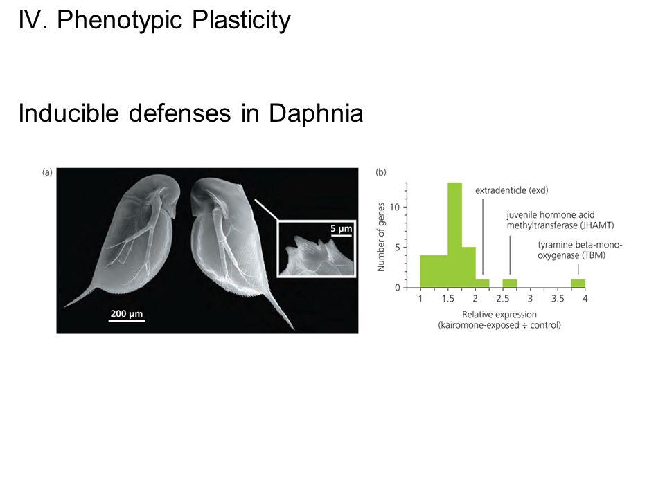 IV. Phenotypic Plasticity Inducible defenses in Daphnia
