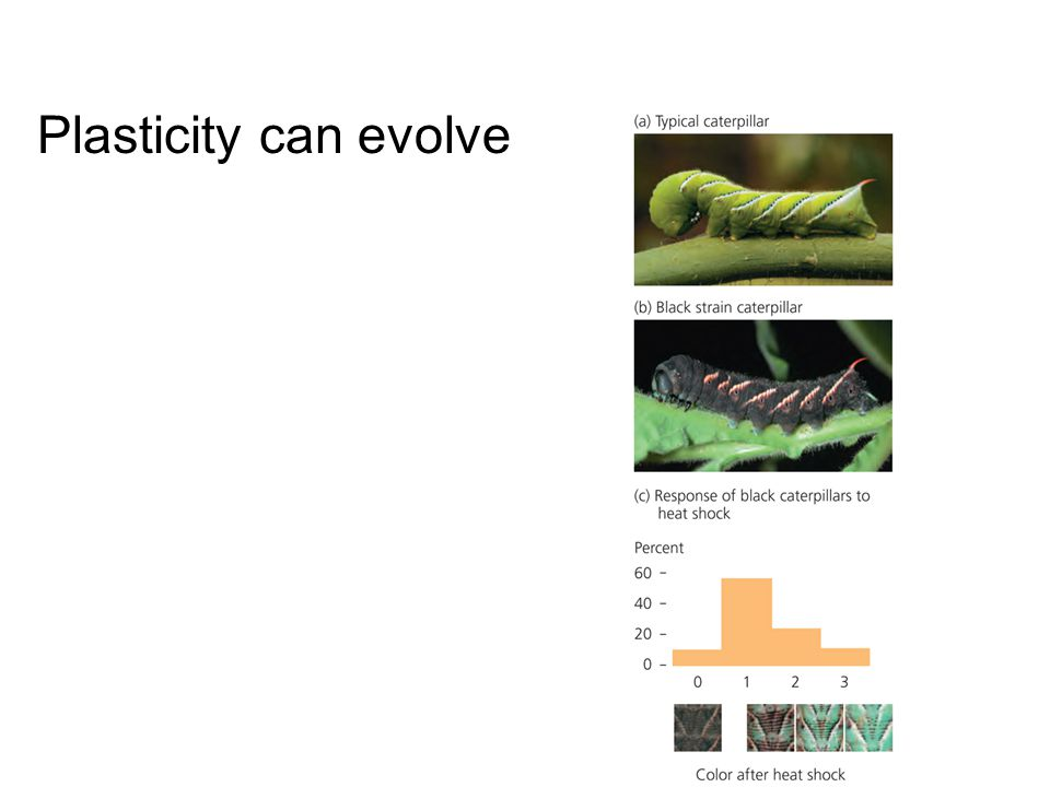 Plasticity can evolve