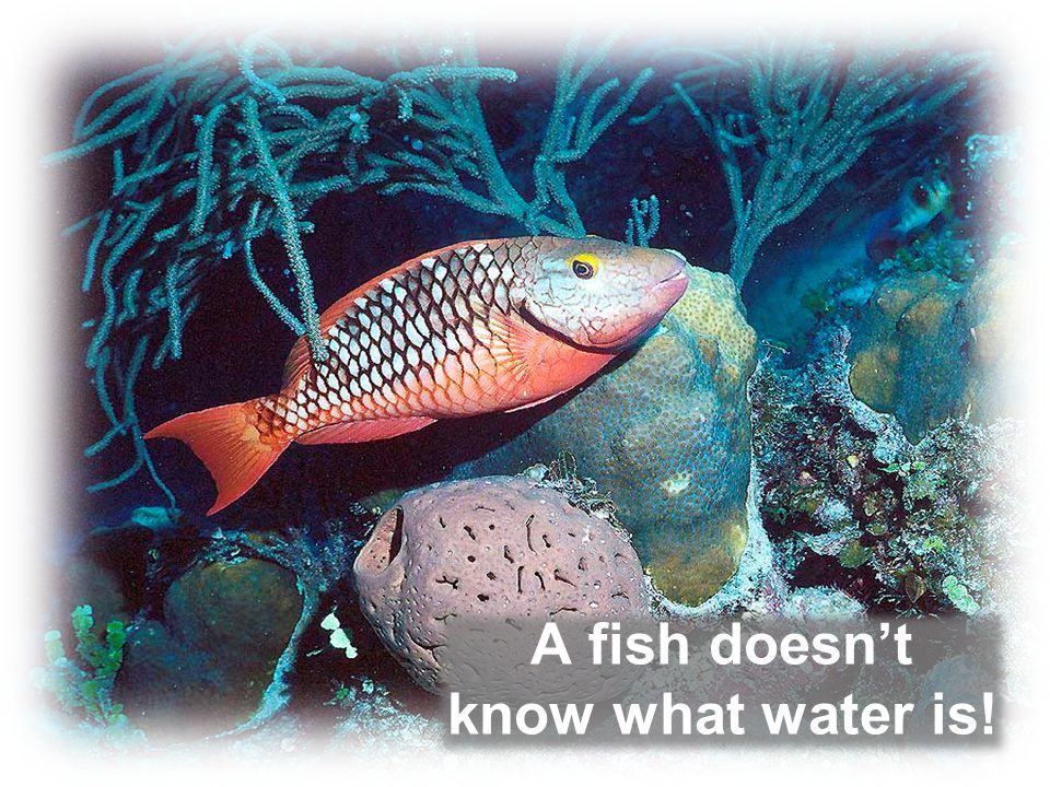 A fish doesn't know what water is!