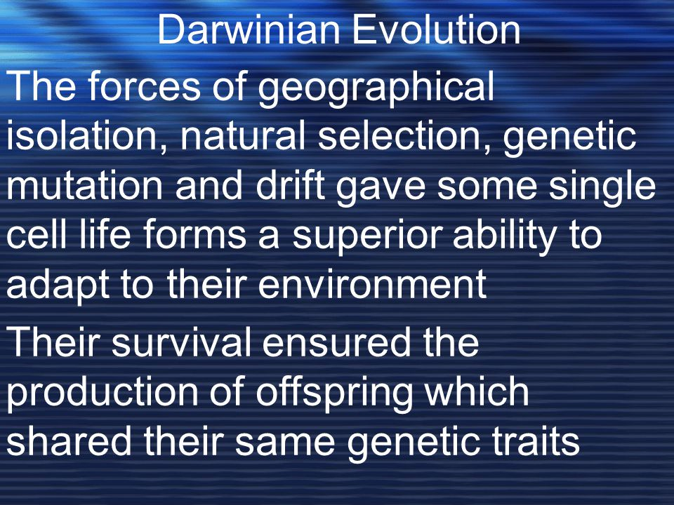 The forces of geographical isolation, natural selection, genetic mutation and drift gave some single cell life forms a superior ability to adapt to their environment Darwinian Evolution Their survival ensured the production of offspring which shared their same genetic traits