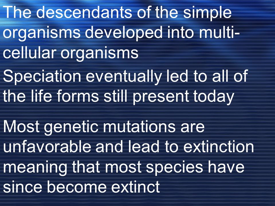 The descendants of the simple organisms developed into multi- cellular organisms Speciation eventually led to all of the life forms still present today Most genetic mutations are unfavorable and lead to extinction meaning that most species have since become extinct