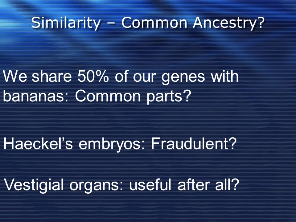 Similarity – Common Ancestry? We share 50% of our genes with bananas: Common parts? Haeckel's embryos: Fraudulent? Vestigial organs: useful after all?