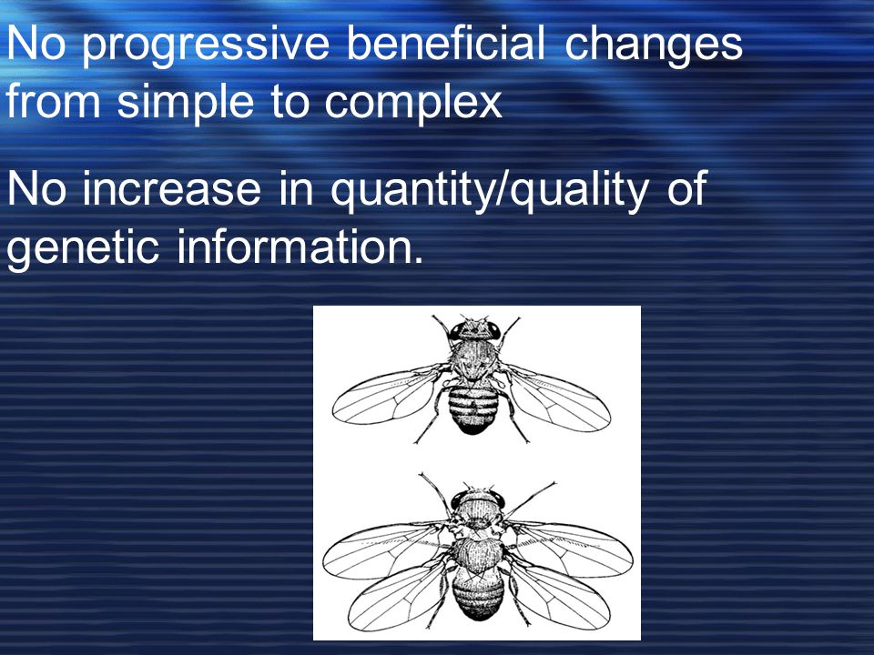 No progressive beneficial changes from simple to complex No increase in quantity/quality of genetic information.