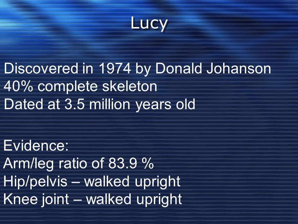Lucy Discovered in 1974 by Donald Johanson 40% complete skeleton Dated at 3.5 million years old Evidence: Arm/leg ratio of 83.9 % Hip/pelvis – walked