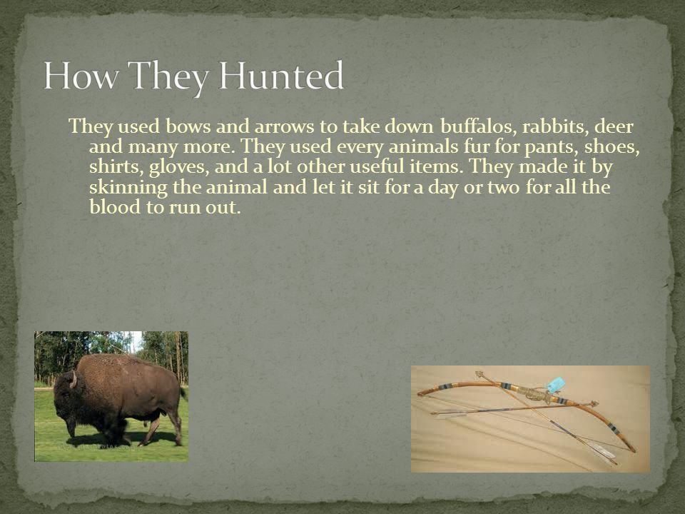 They used bows and arrows to take down buffalos, rabbits, deer and many more.
