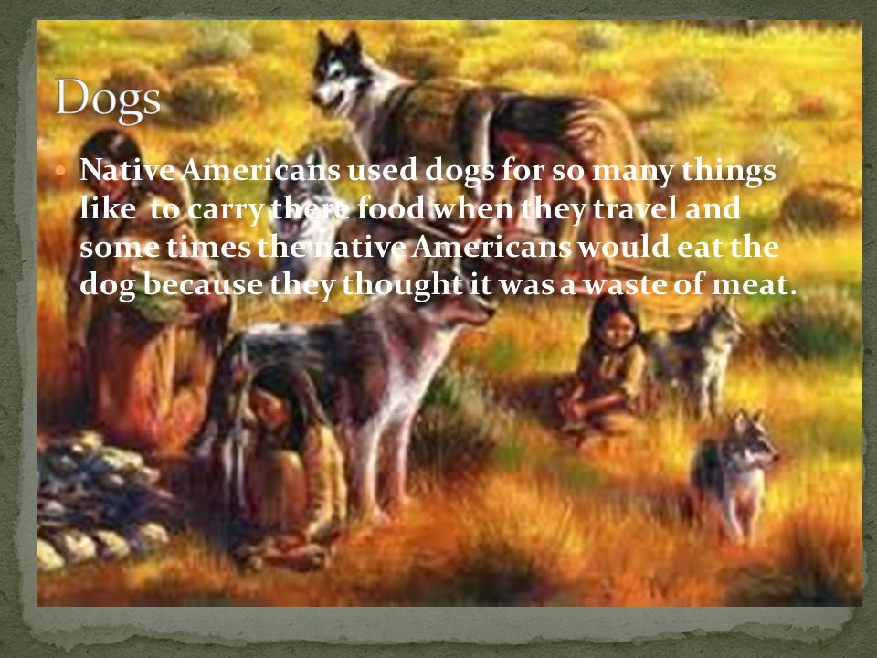 Native Americans used dogs for so many things like to carry there food when they travel and some times the native Americans would eat the dog because