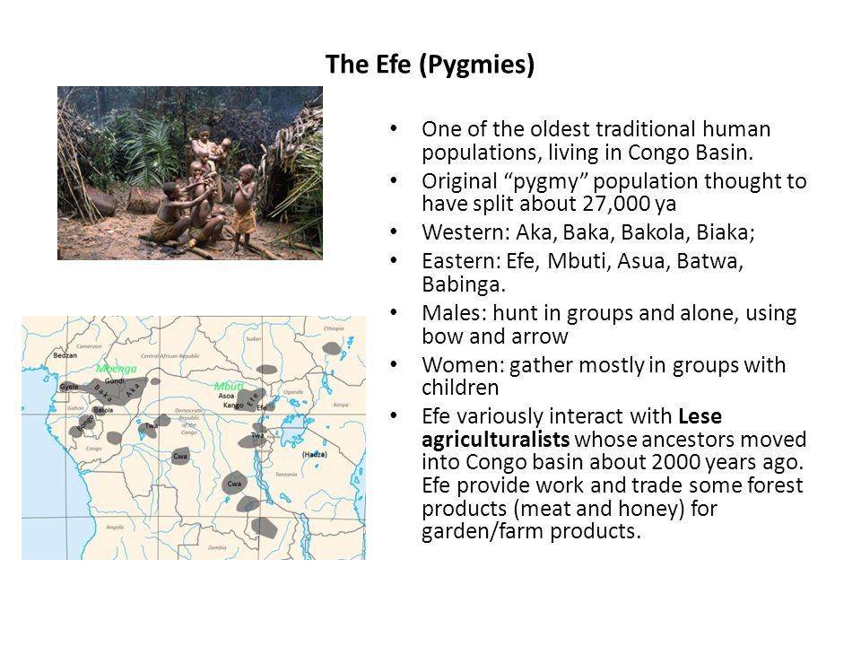 The Efe (Pygmies) One of the oldest traditional human populations, living in Congo Basin.