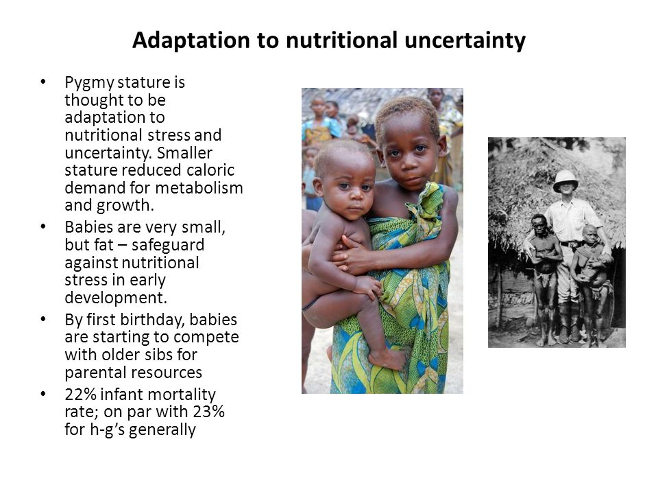 Adaptation to nutritional uncertainty Pygmy stature is thought to be adaptation to nutritional stress and uncertainty.