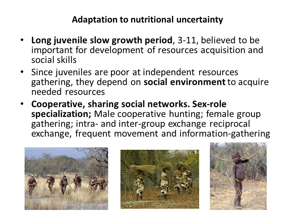 Adaptation to nutritional uncertainty Long juvenile slow growth period, 3-11, believed to be important for development of resources acquisition and social skills Since juveniles are poor at independent resources gathering, they depend on social environment to acquire needed resources Cooperative, sharing social networks.