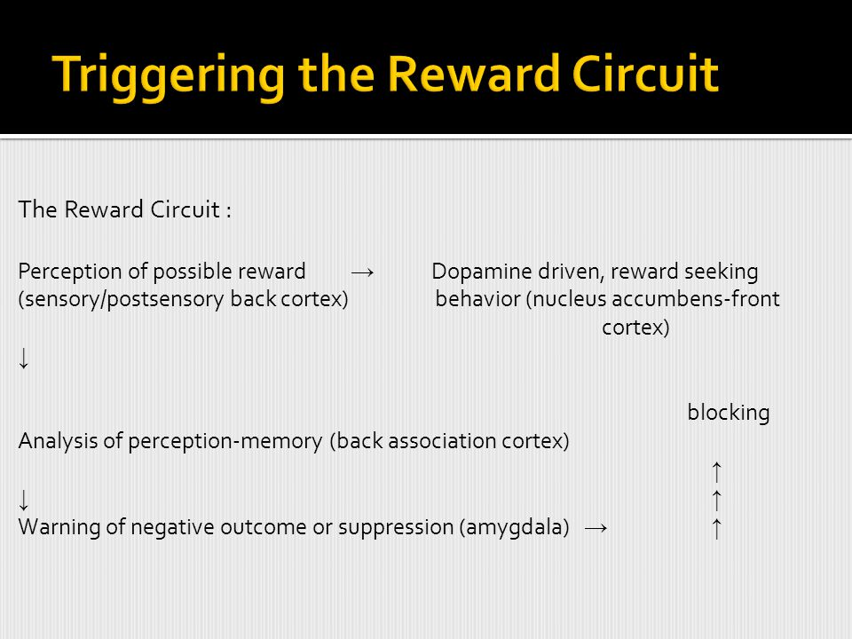 The Reward Circuit : Perception of possible reward → Dopamine driven, reward seeking (sensory/postsensory back cortex) behavior (nucleus accumbens-front cortex) ↓ blocking Analysis of perception-memory (back association cortex) ↑ ↓ ↑ Warning of negative outcome or suppression (amygdala) → ↑