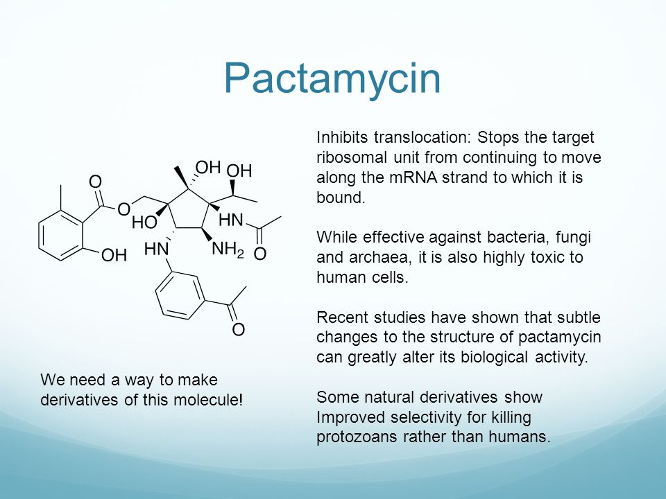 Pactamycin Inhibits translocation: Stops the target ribosomal unit from continuing to move along the mRNA strand to which it is bound.