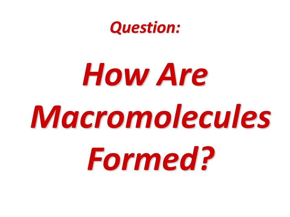 Question: How Are Macromolecules Formed