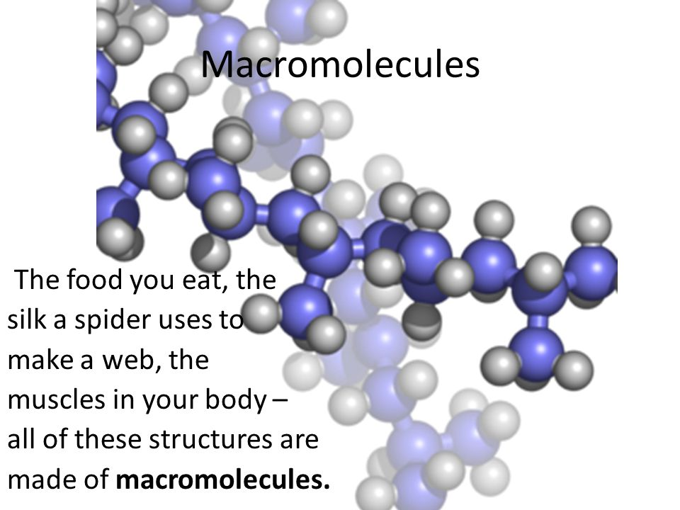 Macromolecules The food you eat, the silk a spider uses to make a web, the muscles in your body – all of these structures are made of macromolecules.