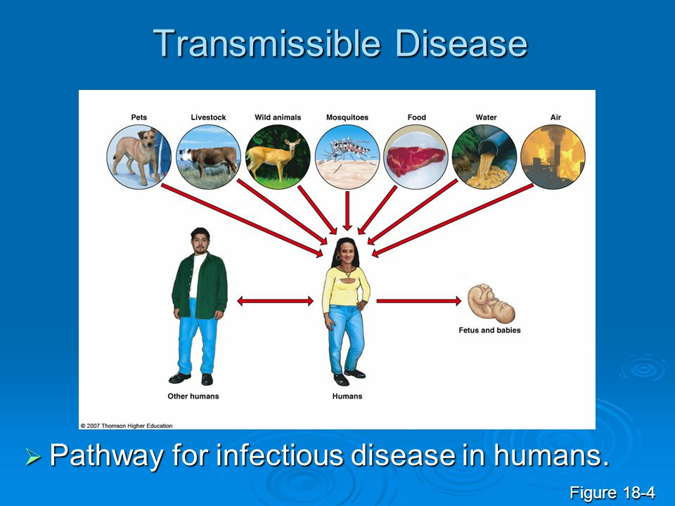 Transmissible Disease  Pathway for infectious disease in humans. Figure 18-4