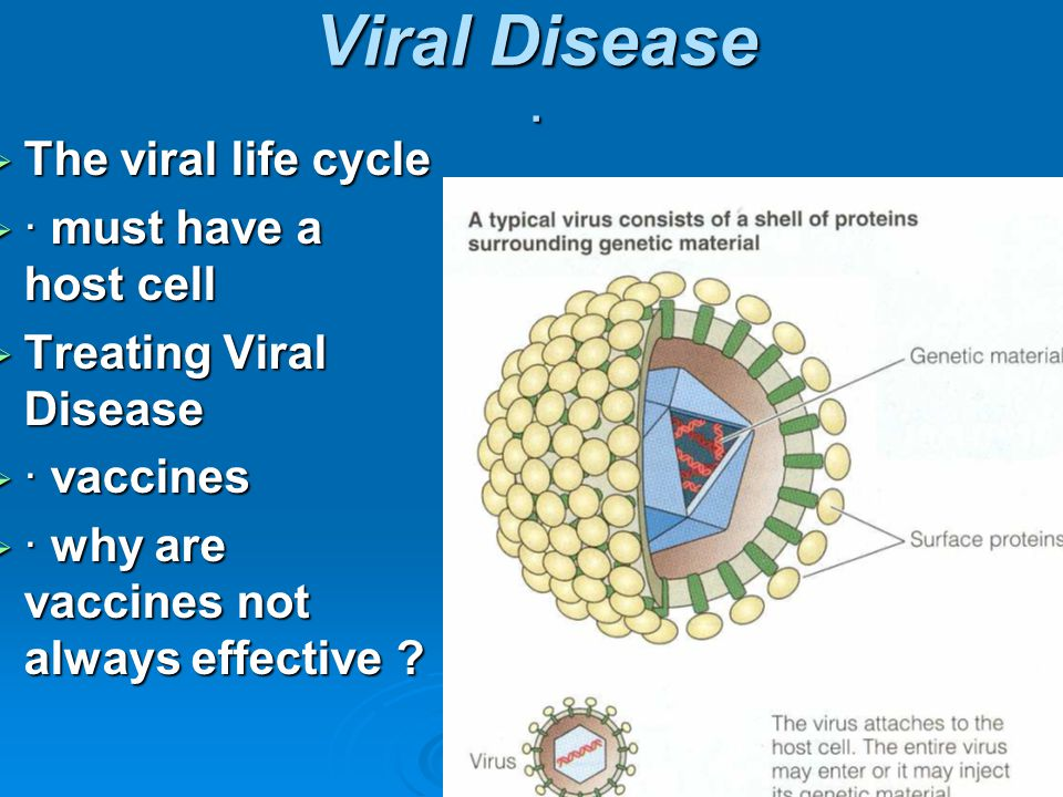  The viral life cycle  · must have a host cell  Treating Viral Disease  · vaccines  · why are vaccines not always effective ? Viral Disease ·
