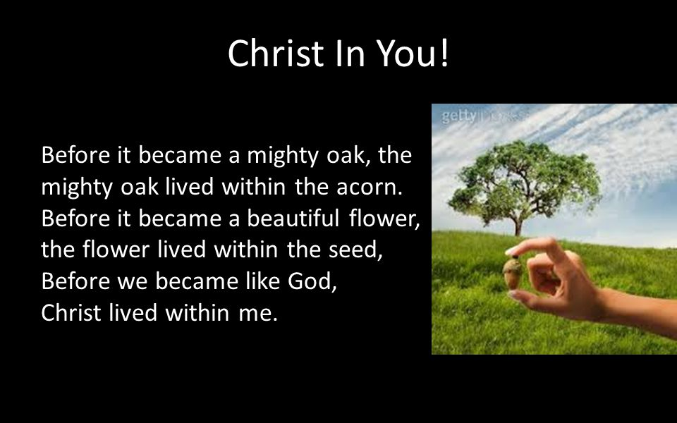 Christ In You! Before it became a mighty oak, the mighty oak lived within the acorn. Before it became a beautiful flower, the flower lived within the