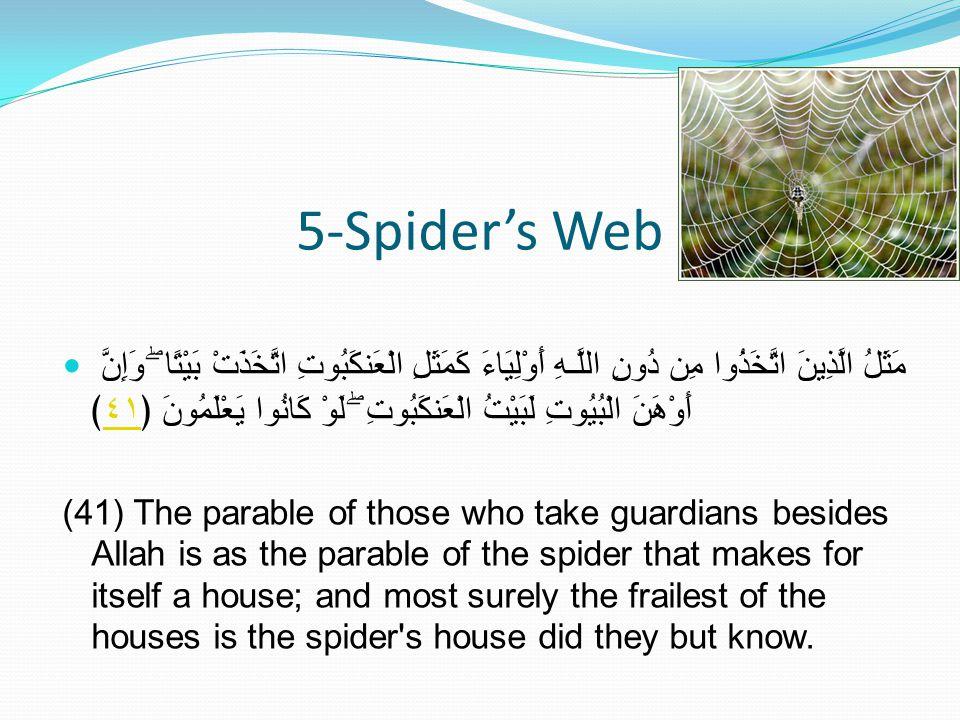 5-Spider's Web مَثَلُ الَّذِينَ اتَّخَذُوا مِن دُونِ اللَّـهِ أَوْلِيَاءَ كَمَثَلِ الْعَنكَبُوتِ اتَّخَذَتْ بَيْتًا ۖ وَإِنَّ أَوْهَنَ الْبُيُوتِ لَبَيْتُ الْعَنكَبُوتِ ۖ لَوْ كَانُوا يَعْلَمُونَ ﴿٤١﴾٤١ (41) The parable of those who take guardians besides Allah is as the parable of the spider that makes for itself a house; and most surely the frailest of the houses is the spider s house did they but know.