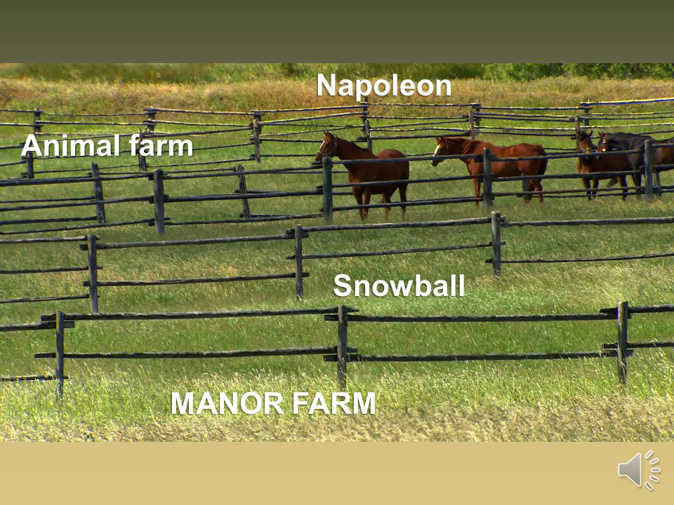 Napoleon MANOR FARM Animal farm Snowball