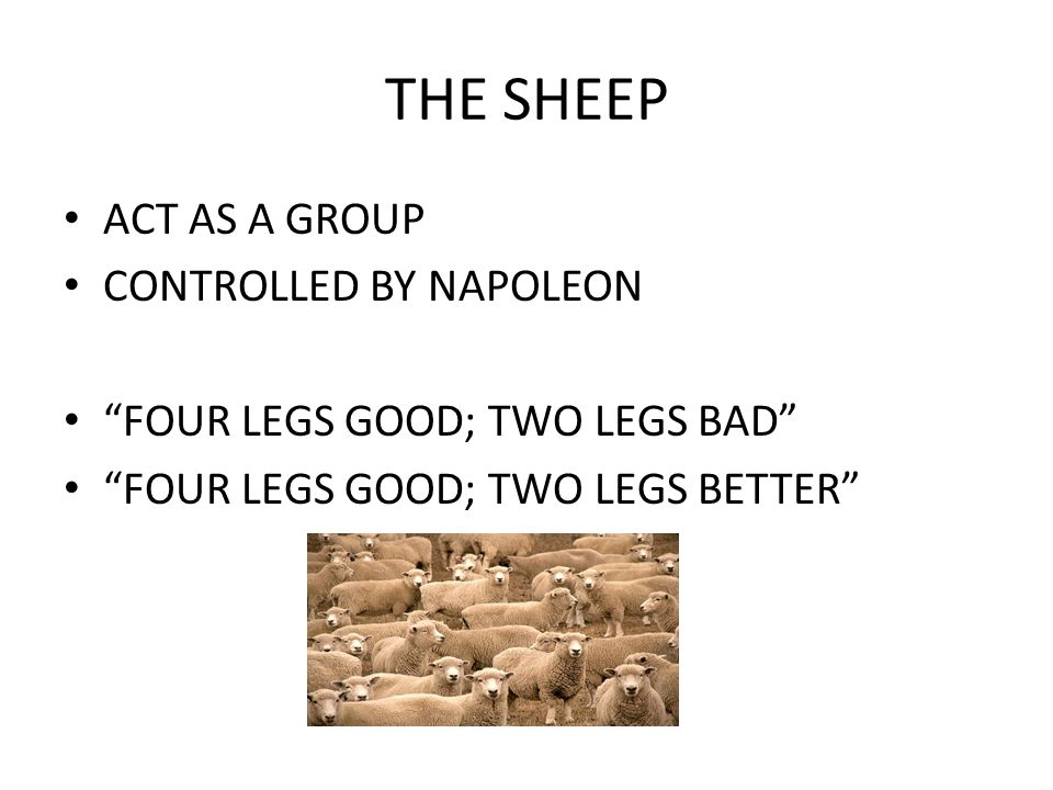"""THE SHEEP ACT AS A GROUP CONTROLLED BY NAPOLEON """"FOUR LEGS GOOD; TWO LEGS BAD"""" """"FOUR LEGS GOOD; TWO LEGS BETTER"""""""